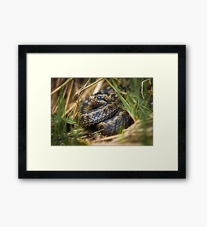 Snake in the Grass Framed Print