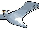 Seagull by Colin Bentham