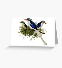 FF - Kingfishers - 1 Greeting Card