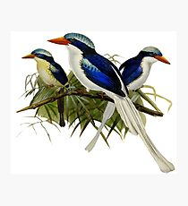 FF - Kingfishers - 1 Photographic Print