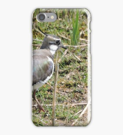 Lovely Lapwing iPhone Case/Skin