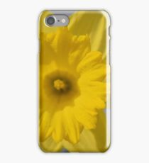 daffodil in the spring iPhone Case/Skin