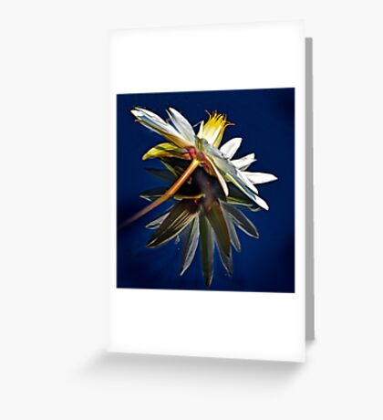 Water Lily on Water Greeting Card