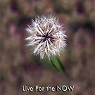 LIVE IN THE NOW by Elisabeth Dubois