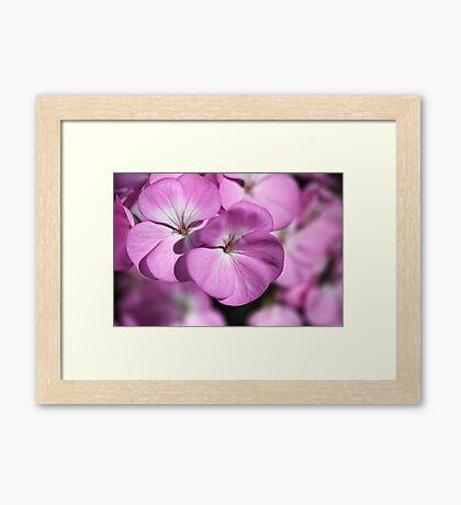 Wonderful Uncommon Geranium Framed Print
