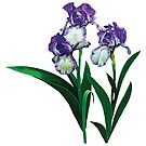Three Purple and White Irises by Susan Savad