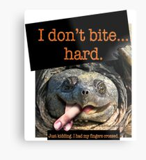 Snapping Turtle - I don't bite hard. Just kidding. I had my fingers crossed. Metal Print