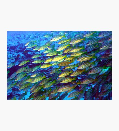 Coral and a school of fish Photographic Print