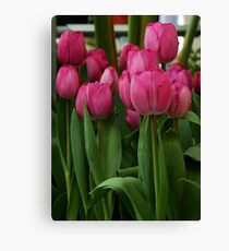 Vibrant pink Tulips Canvas Print