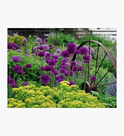 Glorious colours of Spring Photographic Print