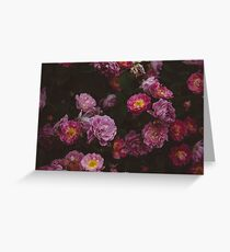 Shades of Pink Greeting Card