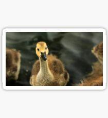 Gosling 3 Sticker