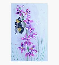 Bumble bee sitting on a flower Photographic Print
