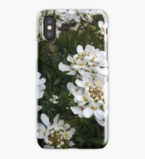 Candytuft Flowers iPhone Case/Skin