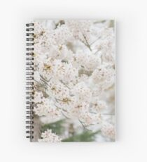 Soft White Cherry Blossoms Spiral Notebook