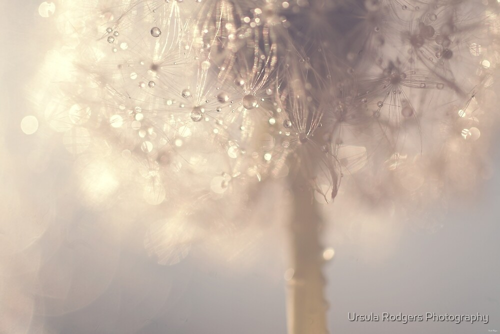 Seeds of Magic by Ursula Rodgers Photography
