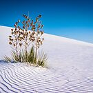 White Sands National Monument by J. Day