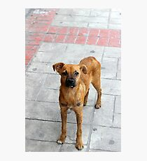 Stray Dog on the Street Photographic Print