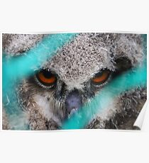 eyes of fire, young bird of prey portrait design Poster