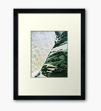 Alocasia Araceae Framed Print