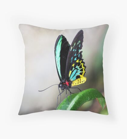Cairns Birdwings Throw Pillow
