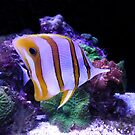 Yellow and White Butterfly Fish by elledeegee
