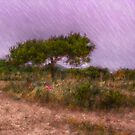 Natural Roundabout by jean-louis bouzou