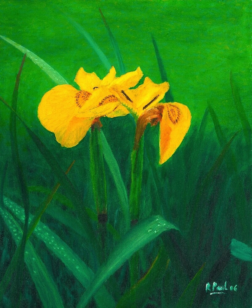 Wild Yellow Flag by Richard Paul