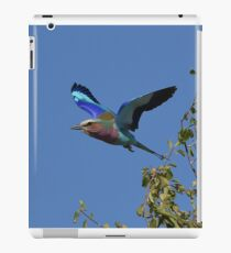Lilac Breasted Roller in flight, Botswana iPad Case/Skin