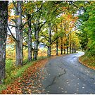 Autumn Colors on George Road by Wayne King