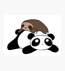 Little Sloth and Panda Photographic Print
