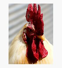 One Badass Mother Clucker Photographic Print