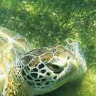 Underwater Turtle by Dagoth