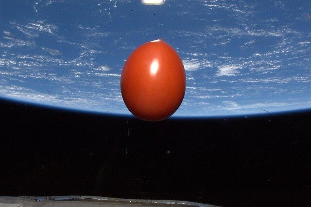 Ripe Tomato in Space by j  shu