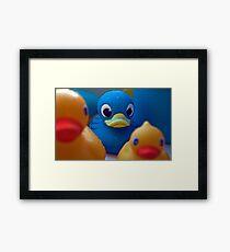 Ducky Framed Print