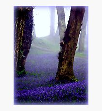 Bluebells in the Mist Photographic Print