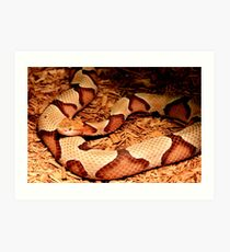 Copperhead for Monnie Art Print