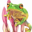 Tree frog  by casshanley