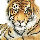 tiger by casshanley