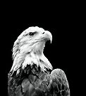 The Majestic Bald Eagle  by Beth Brightman