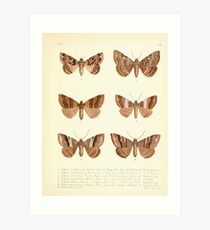 Aid to the identification of insects Charles Owen Waterhouse 1890 V1 V2 158 Art Print
