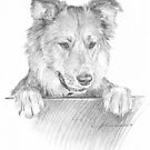 dog looking over stable door drawing by Mike Theuer