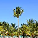 Palm Tree Mexican Beach by Dagoth