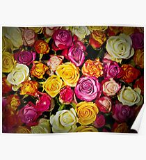 Color roses Poster
