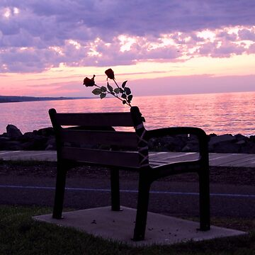 Barb and Tooge's Bench by Michiale