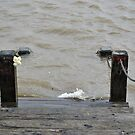 Disappearing Dock  by Jennifer  Causley