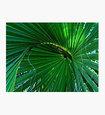 Playful Palm Photographic Print
