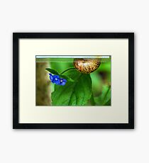 Snail Mail Delivering  These Flowers Framed Print