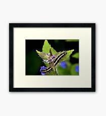 My First Tiger Moth Caterpillar 2014 Framed Print