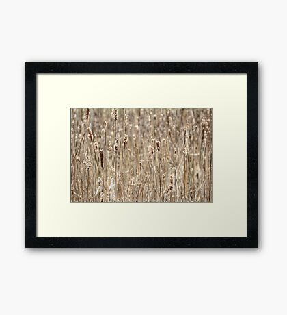 Cattails In The Wind Framed Print
